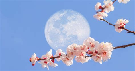 What is the Super Flower Moon, and how can I see it?