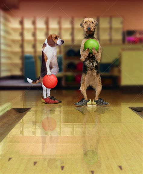 Funny picture of two dogs bowling complete with bowling
