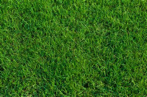 Best Grass Types for Lawins in Knoxville