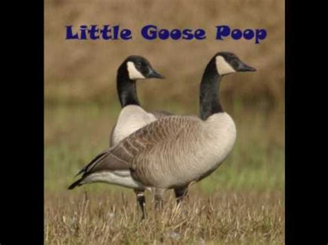 A little goose poop - YouTube