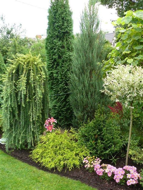 616 best evergreen small trees for Texas zone 8 images on