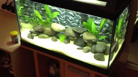 Tropical fish tank 60 litre cycle 2nd update - YouTube