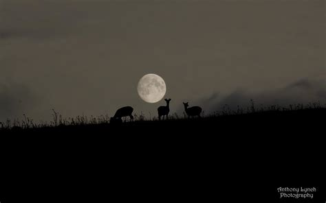 Harvest Moon 2020: When and how to see October's full moon